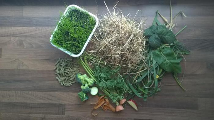 Можно ли давать кроликам морковь и морковную ботву: польза продукта и основные правила кормления