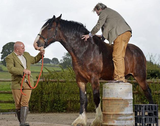 Чем отличается лошадь от кобылы — topsamoe.ru