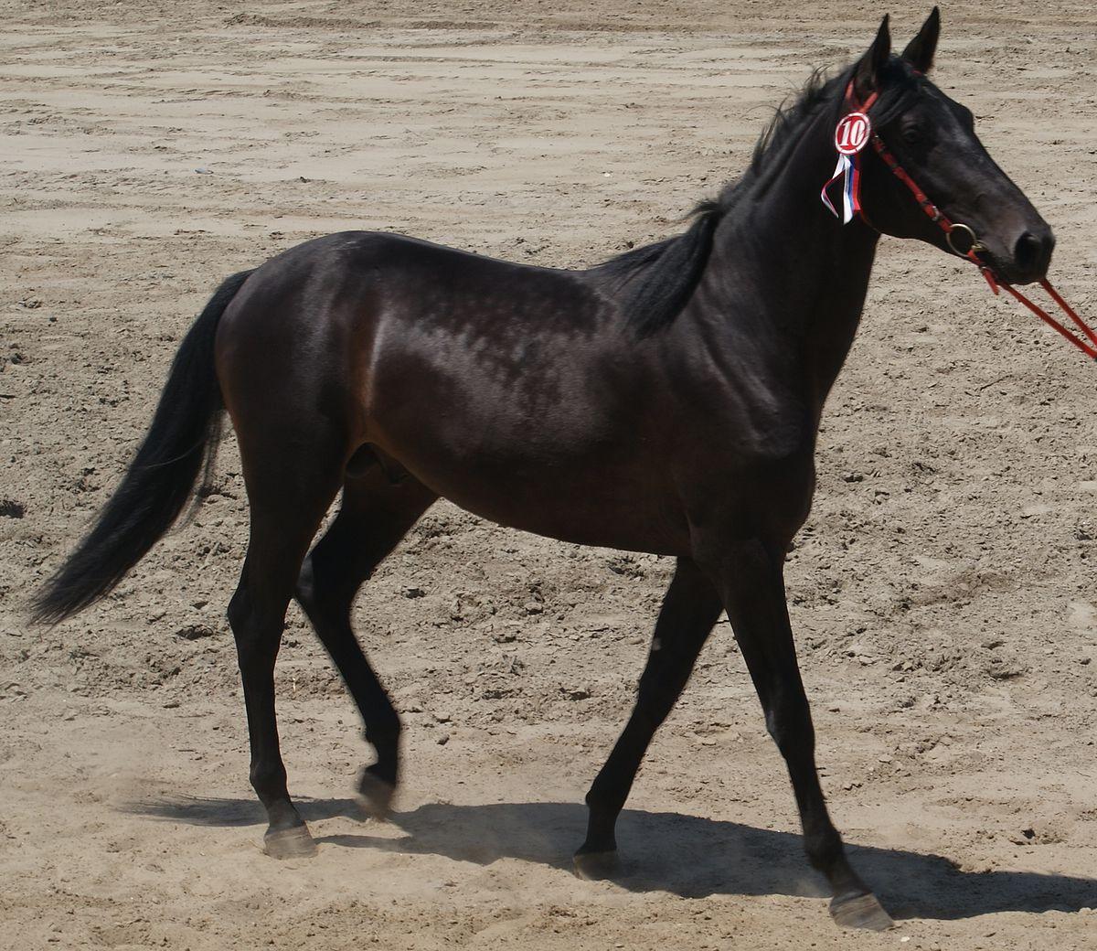 Популярные породы лошадей: название, характеристики и фото