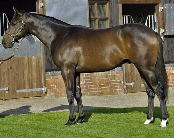 Английская чистокровная скаковая лошадь: фото и описание, скорость, вес, разведение, кормление, отзывы
