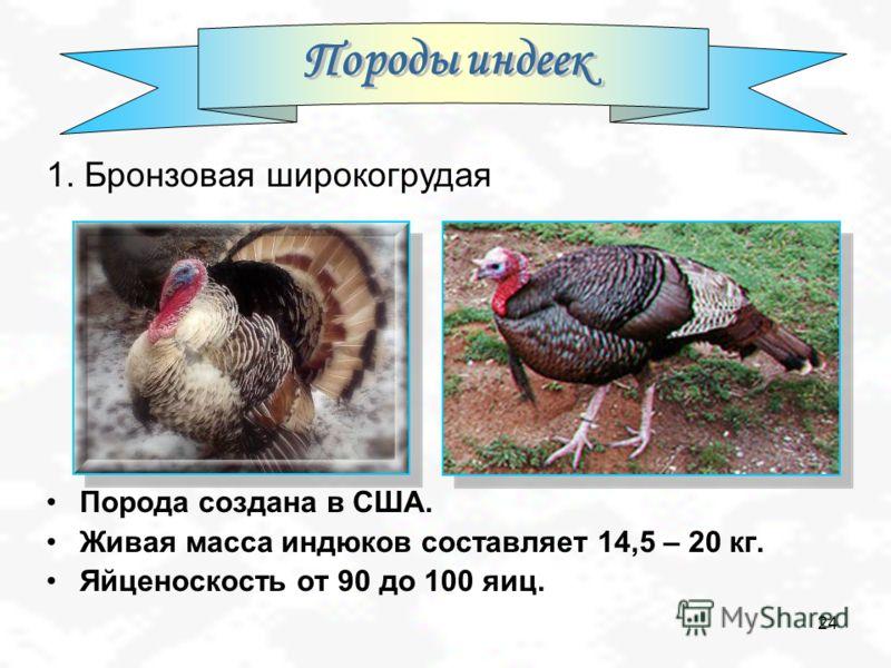 Породы индеек: особенности, характеристики и подробное описание основных пород + 115 фото