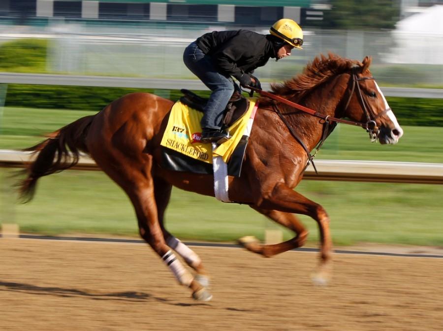 Какие лошади самые быстрые в мире? - мое село