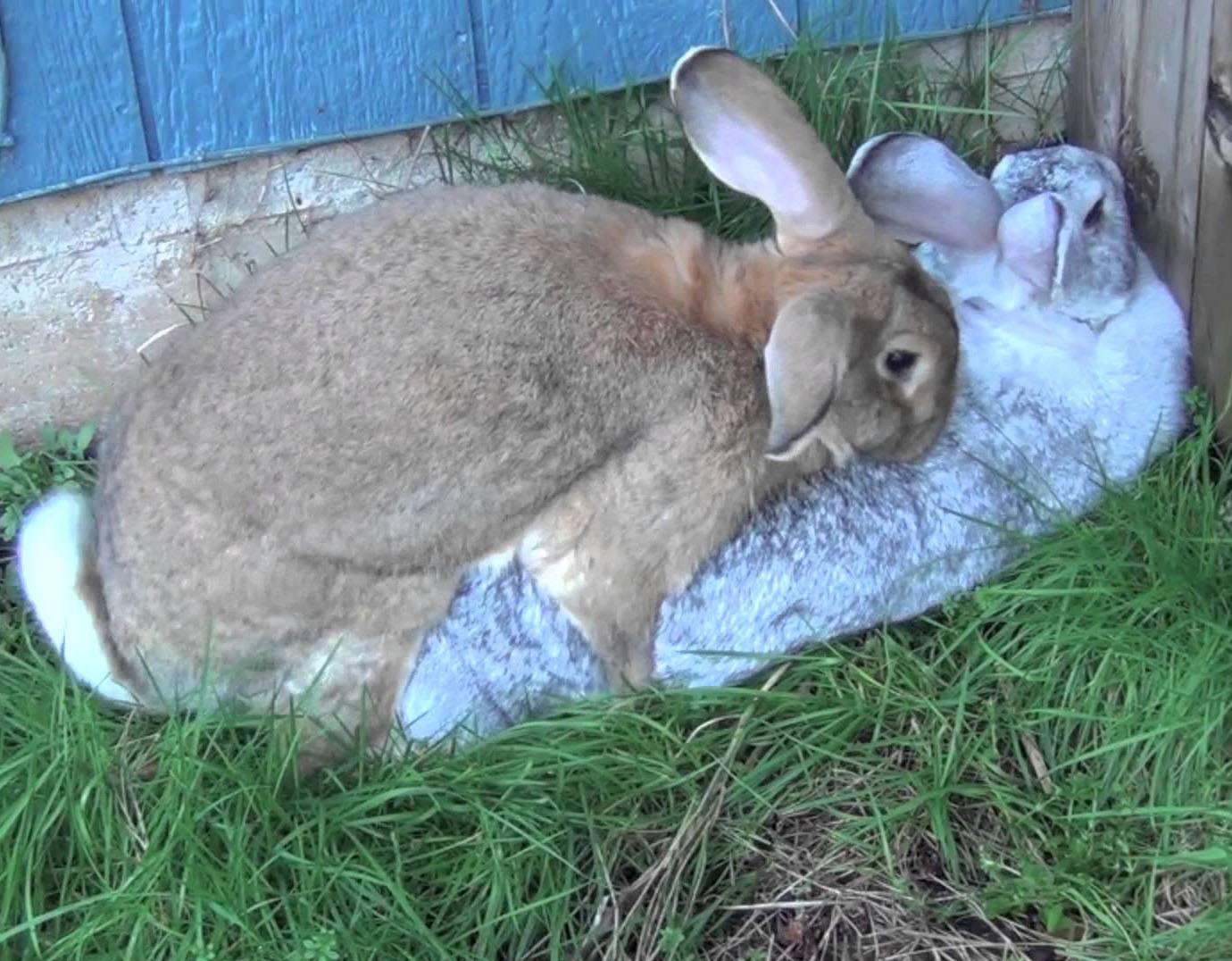 Содержание декоративных кроликов в домашних условиях для начинающих