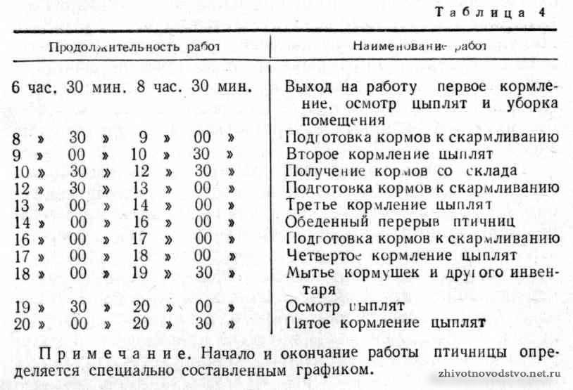 ✅ о температурном режиме для цыплят в первые дни жизни (уход в домашних условиях) - tehnomir32.ru