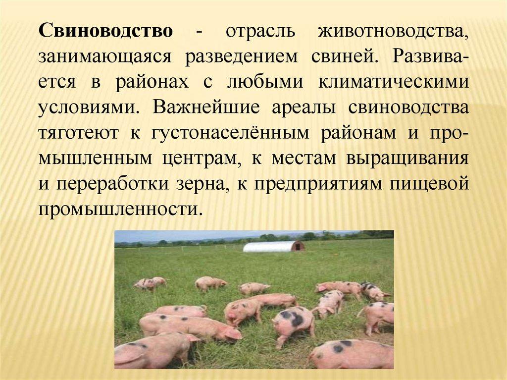 Выращивание и откорм свиньи | fermer.ru - фермер.ру - главный фермерский портал - все о бизнесе в сельском хозяйстве. форум фермеров.