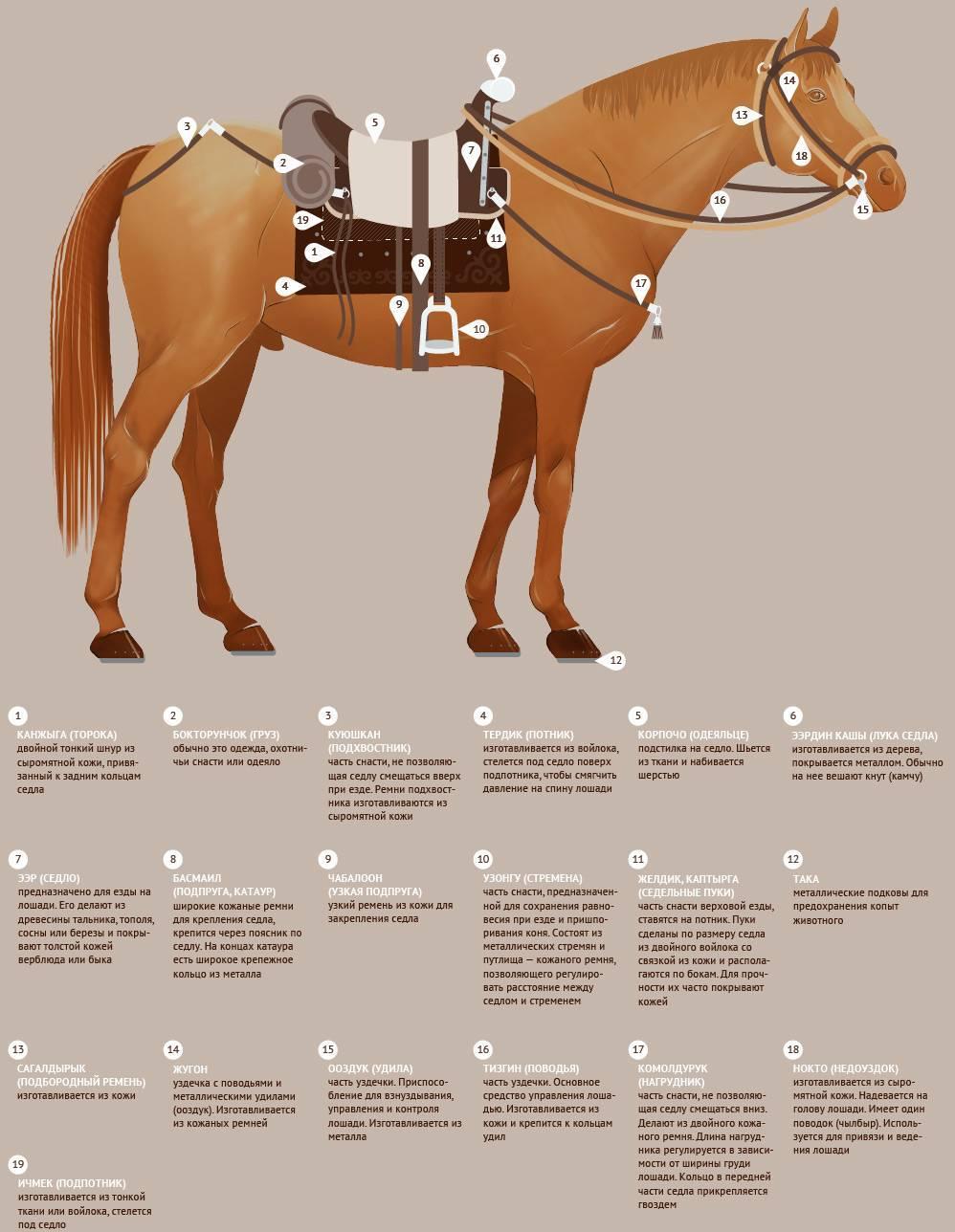 О седлах для лошадей: как правильно седлать лошадь, строение дамского седла