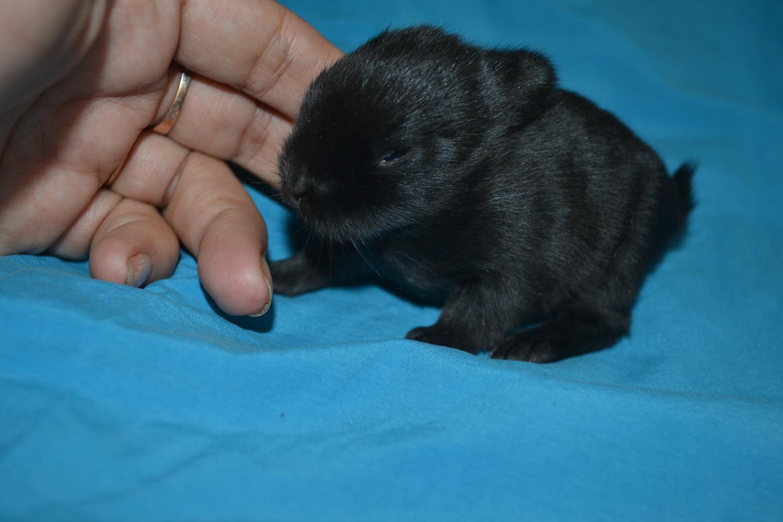 ᐉ когда крольчата выходят из гнезда? - zooon.ru