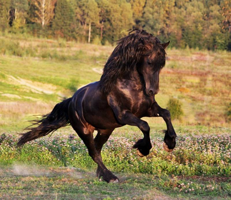 Сколько весит лошадь: основные факты, описание