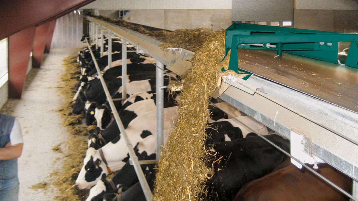 Виды и конструктивные особенности кормораздатчиков для крупного рогатого скота
