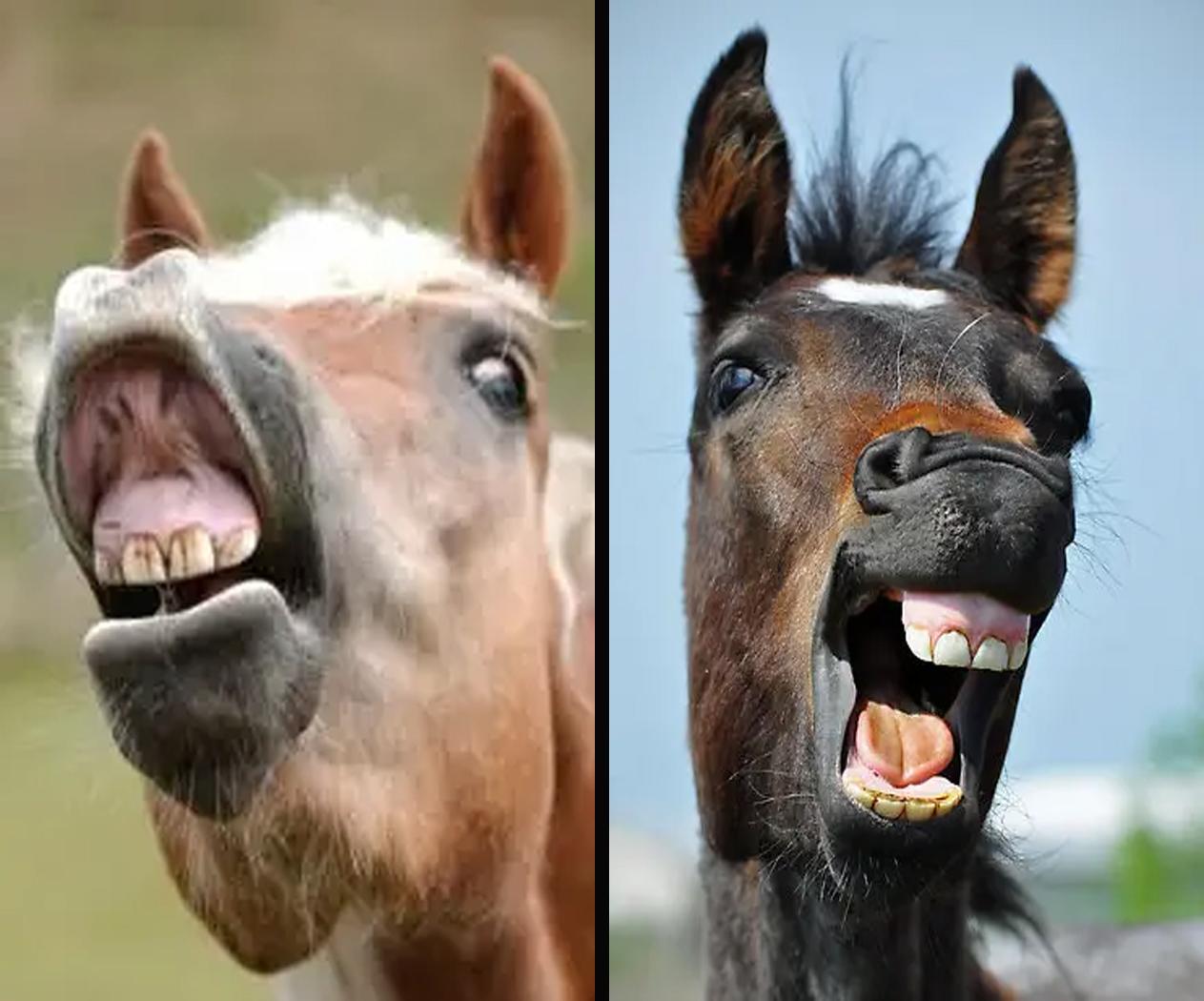 Сколько лошади лет?