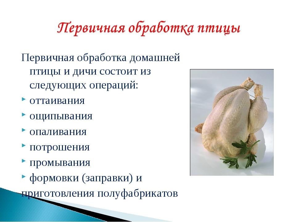Как в домашних условиях забить курицу, петуха, первичная обработка птицы