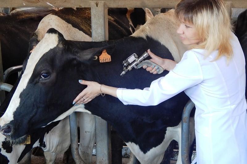 Что делать при туберкулезе у крупного рогатого скота