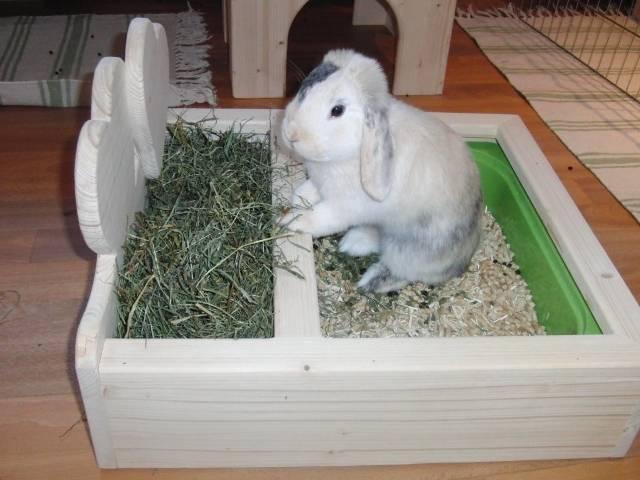✅ о кролике дома: все о декоративных кроликах в домашних условиях, дрессировка - tehnomir32.ru