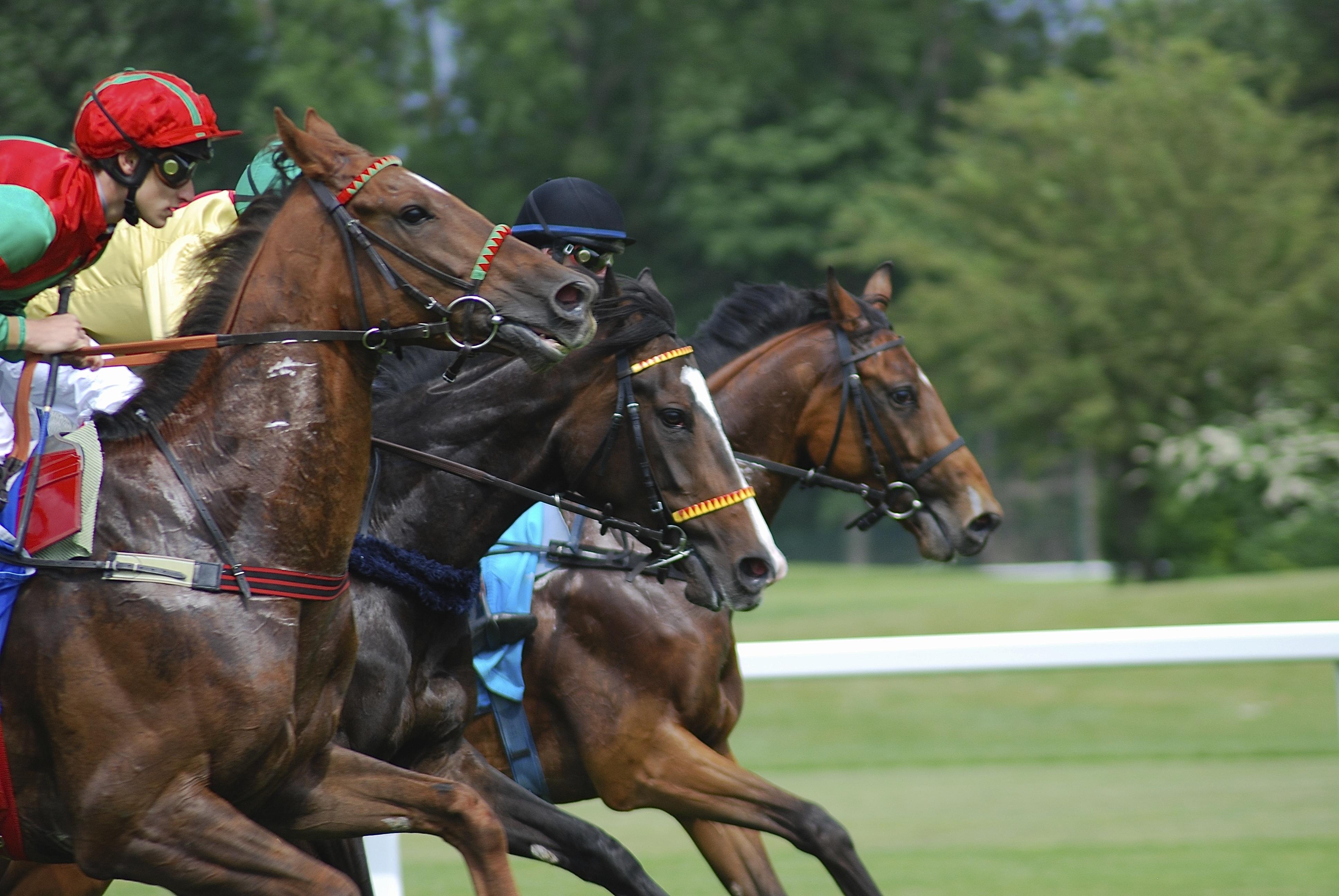 Как правильно делать ставки на скачки лошадей?