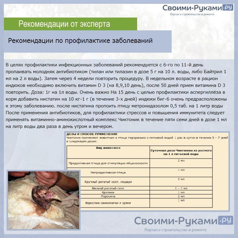 Вакцинация кур и цыплят - таблица в домашних условиях, как делать укол и прививки