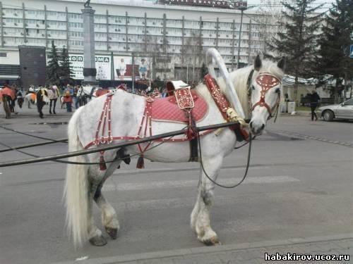 Как запрячь коня: элементы упряжи и правила запряжки - знаток фермы