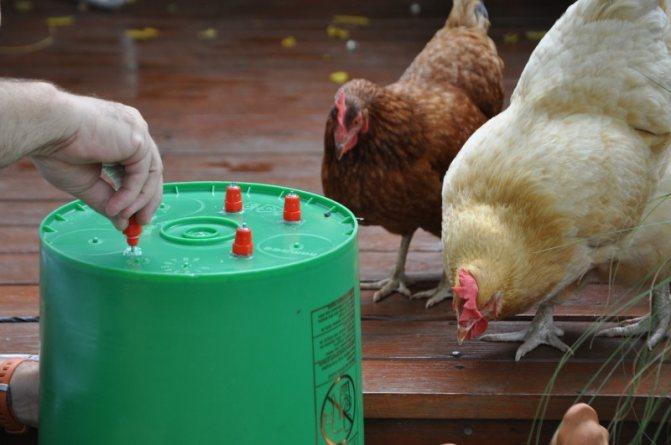 Ниппельные поилки для кур (17 фото): как сделать своими руками? устройство и монтаж. как приучить цыплят-бройлеров к поилке? оригинальные идеи изготовления