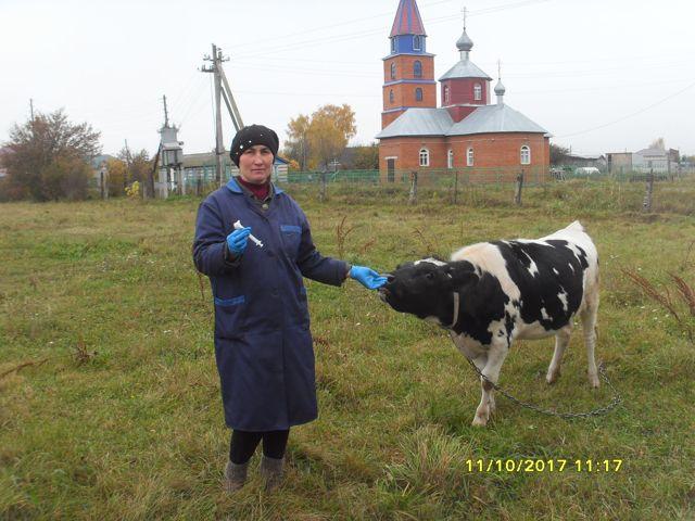 ✅ разведение и содержание коровы (крупный рогатый скот в домашнем хозяйстве) - tehnomir32.ru