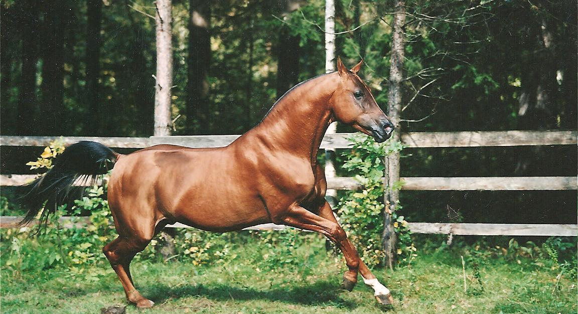 Донская лошадь: особенности разведения и ухода