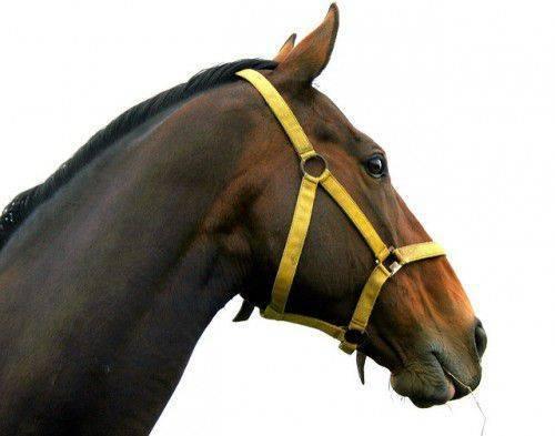 Как сделать недоуздок и уздечку для лошади своими руками?