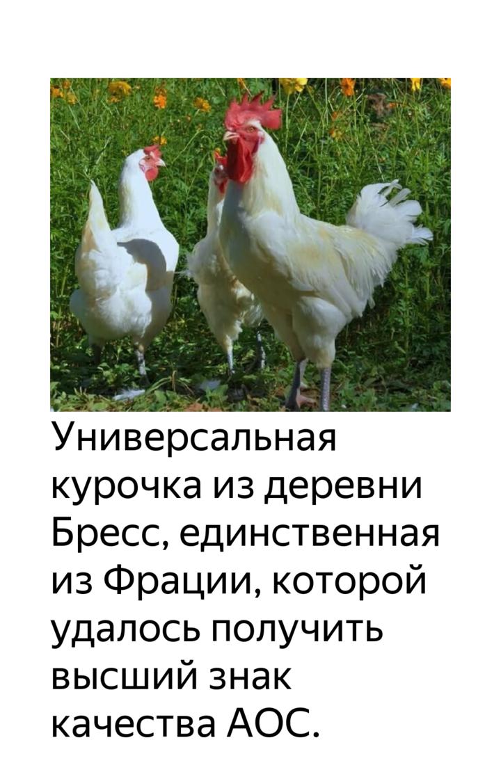 ✅ о курах бресс галльская: характеристики породы, разведение, содержание поголовья - tehnomir32.ru