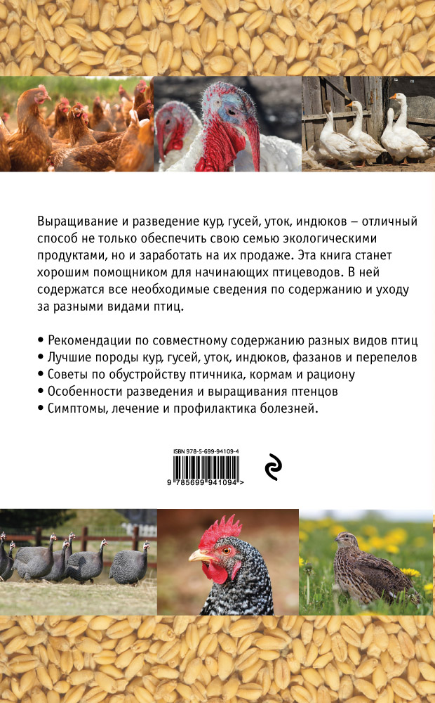Продуктивные породы кур: особенности разведения и содержания — cельхозпортал