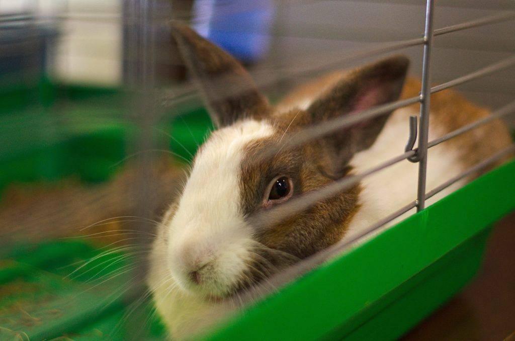 Как приучить кролика к лотку: пошаговая инструкция