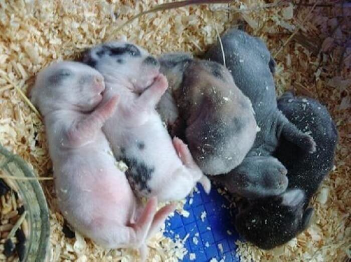 Через сколько дней крольчата открывают глаза