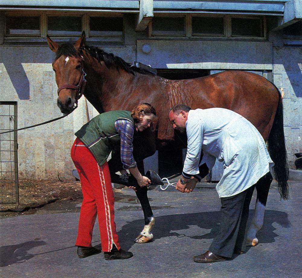 Как ухаживать за лошадью в домашних условиях
