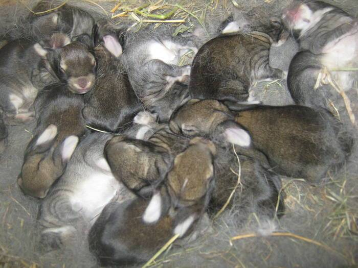 ✅ чем и как лучше кормить кормящую крольчиху после окрола в разное время года, чтобы было молоко - tehnoyug.com