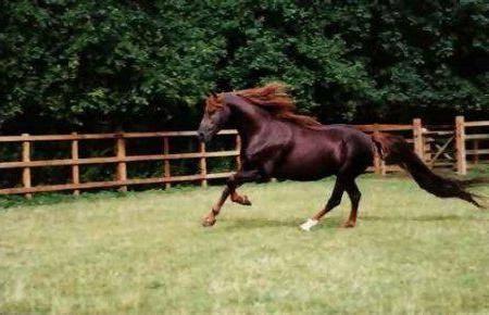 Великие лошади, топ - 10
