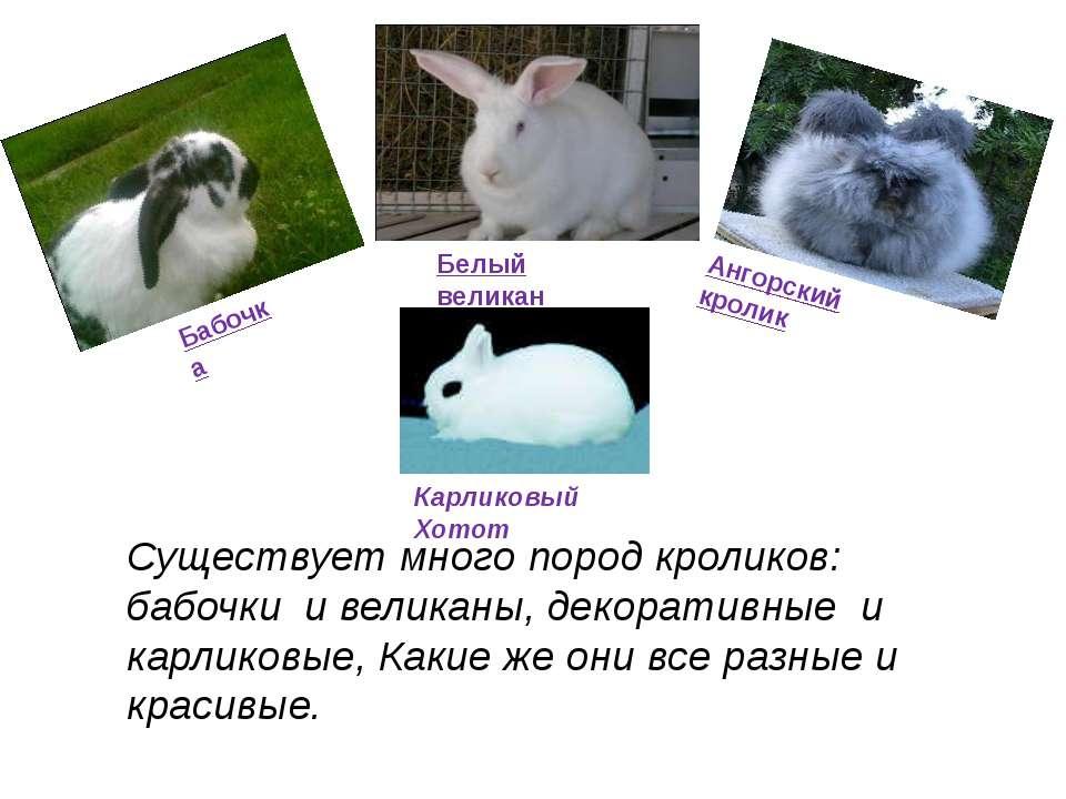 Наш серебристый кролик