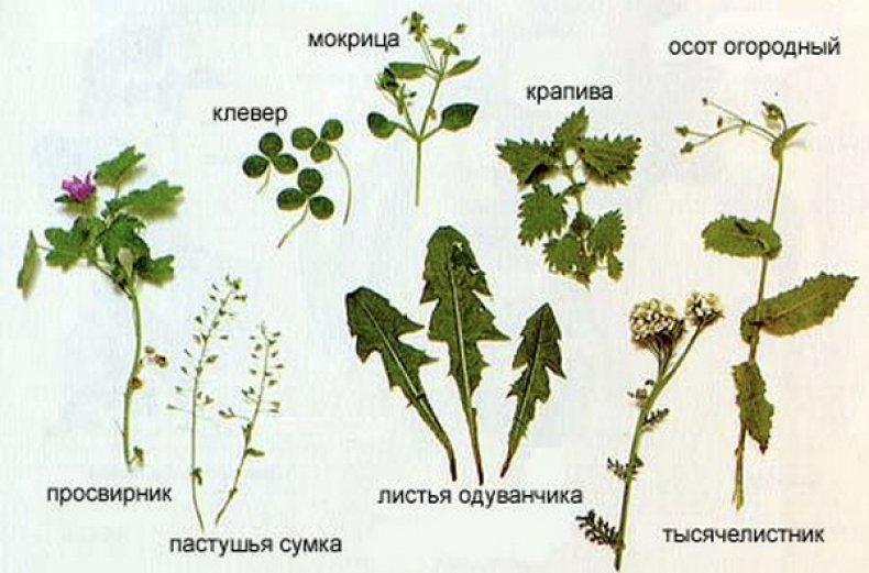 Можно давать кроликам траву или нельзя: польза и вред, как кормить травой