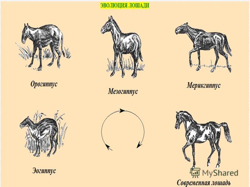 Бег лошади: учимся определять различные аллюры  