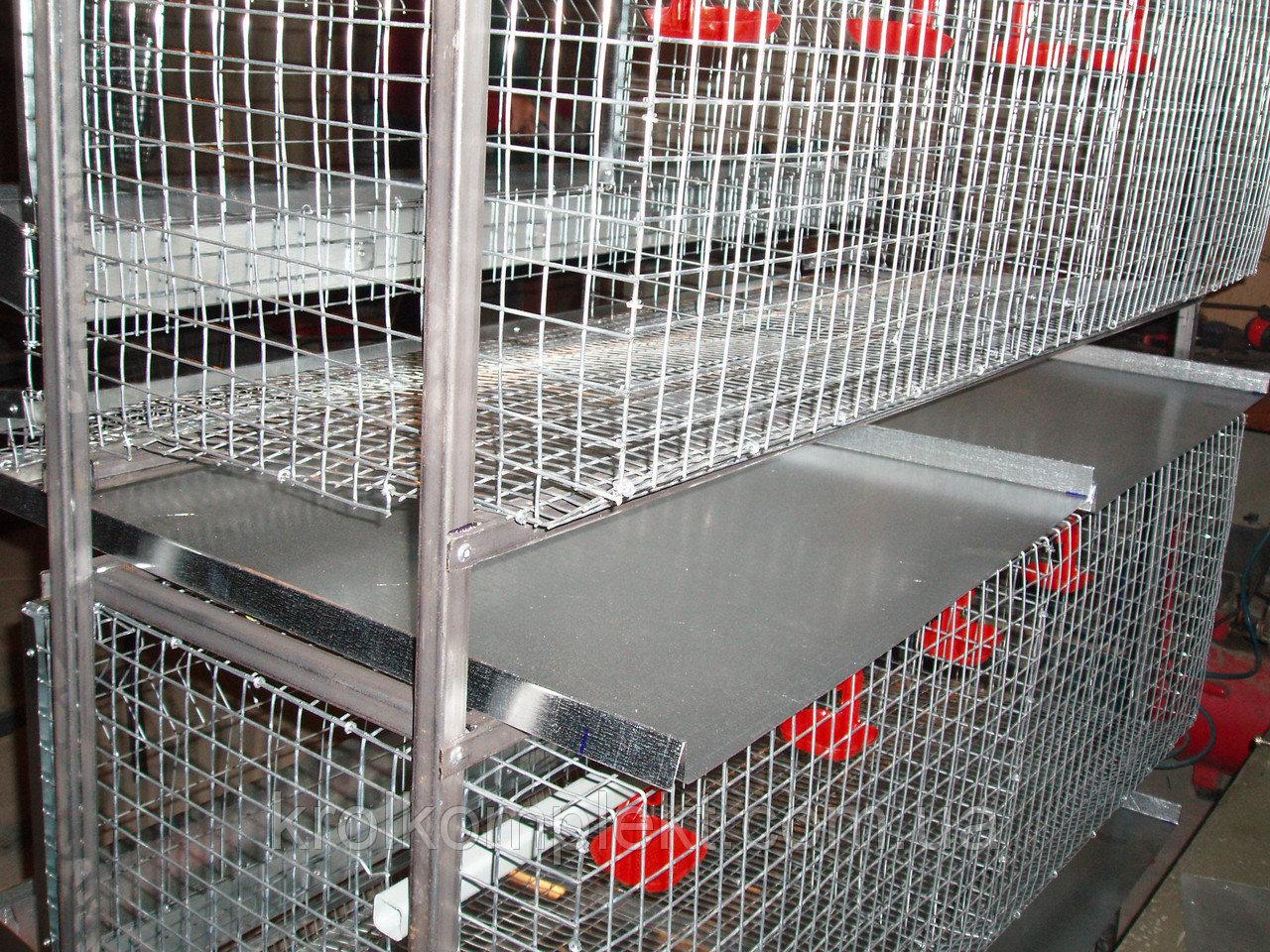 Содержание кур в клетках в домашних условиях: размеры клеток