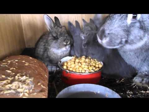Как уберечь кроликов от жары | как охладить клетки кроликам в жару