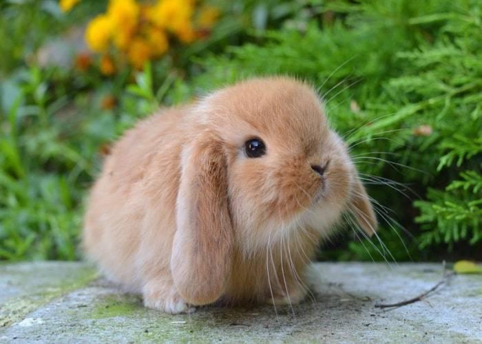 Как приучить кролика к рукам — правила приручения декоративного питомца