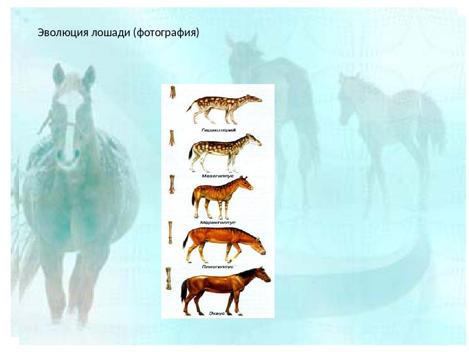 Все о науке о лошадях: как она называется и что она изучает