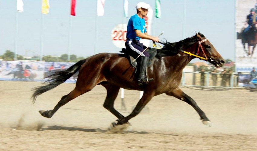 Аллюры лошадей: виды и характеристика, какой бег самый быстрый