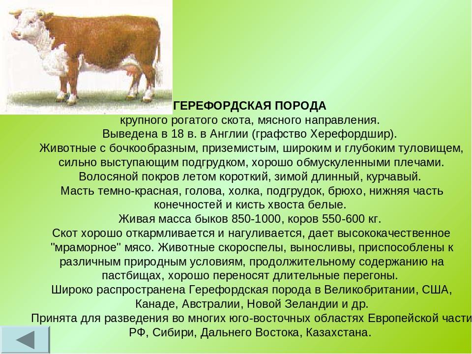 Молочные породы коров: список, характеристики, критерии выбора