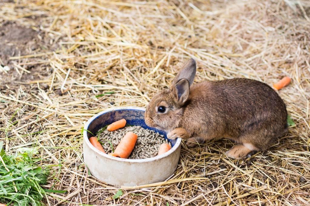 Чем кормить кроликов? 57 фото какой корм едят кролики в домашних условиях. правила кормления. что нельзя им давать?