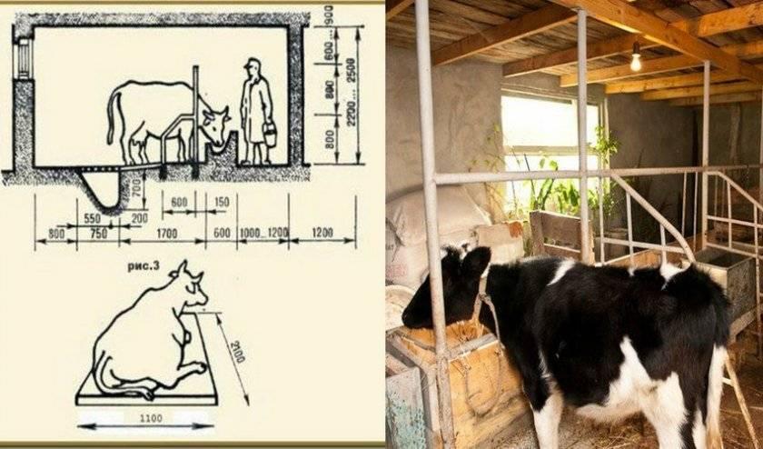 Кормушка для скота своими руками: пошаговые инструкции
