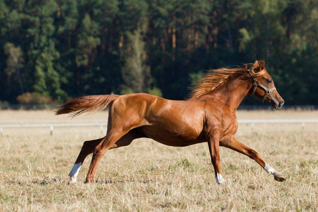 Топ знаменитых коней мира: анилин, абсент, болд рулер, боливар, зеньятта, сухарь