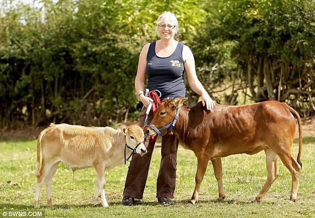 Все о карликовых коровах: происхождение, обзор пород, достоинства и недостатки