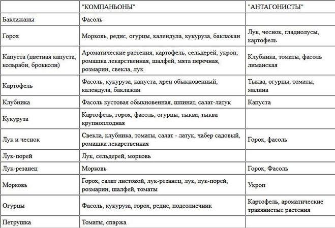 Севооборот, или что после чего сажать в огороде | дела огородные (огород.ru)