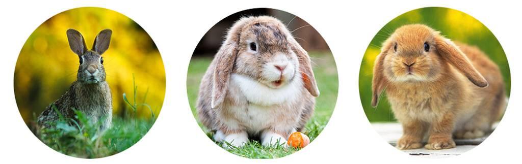 Какие цветы нельзя давать кроликам