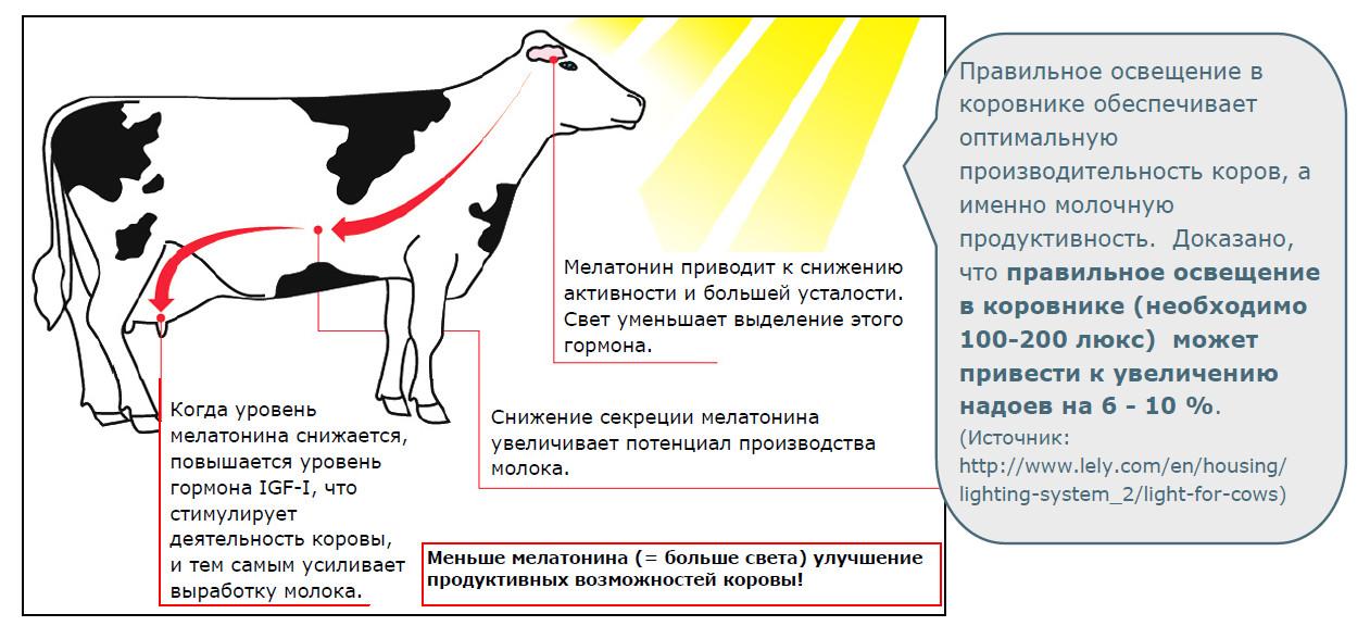 Молочная продуктивность крупного рогатого скота