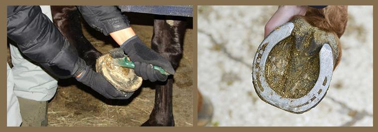 Как и зачем подковывают лошадей?