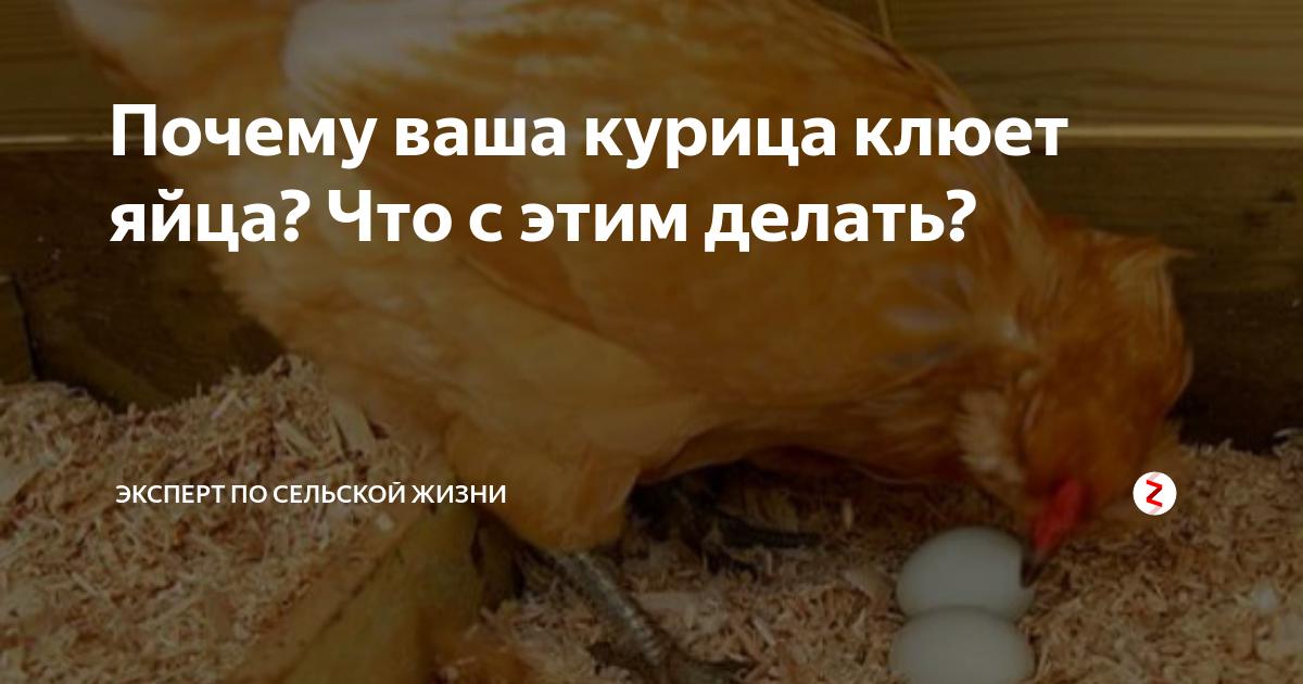 Как правильно решить проблему расклева яиц