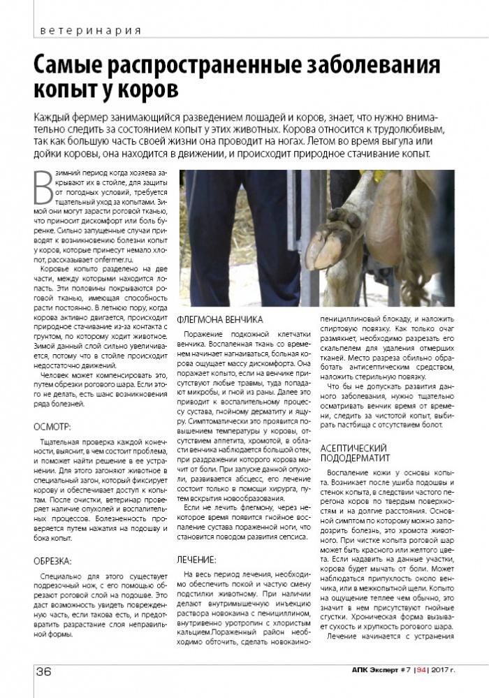 Оценка хромоты копыт и пути решения проблем с хромотой у молочного скота
